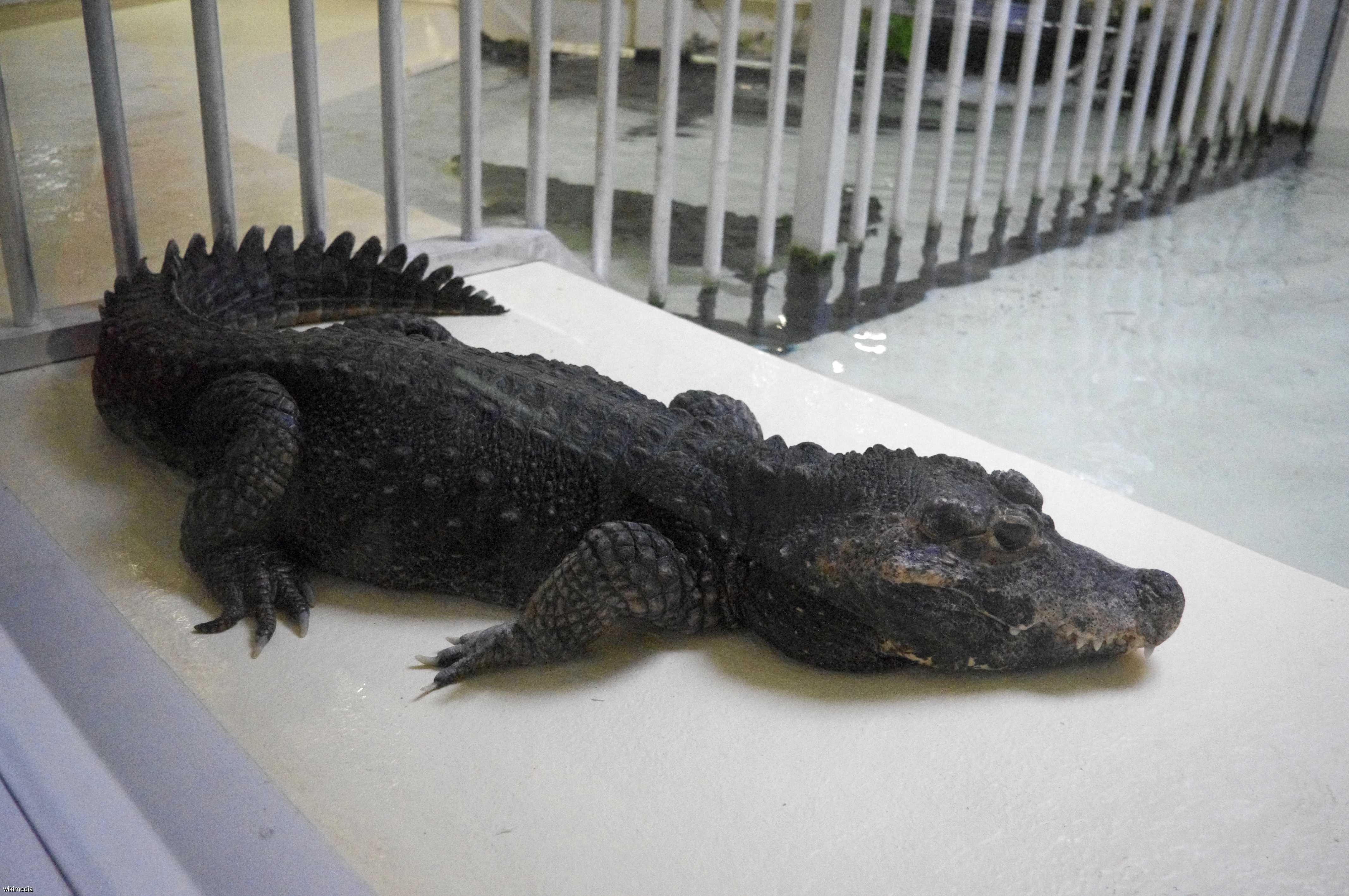 Reptiland : Parc reptile dans le Lot à Martel