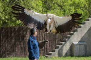Ecoparc du Rocher des Aigles : Rocamadour